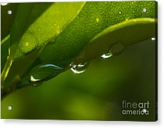 Waterdrops Acrylic Print by Lisa Plymell