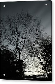 Watereflct4 Acrylic Print