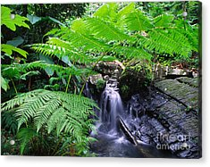 Waterfall And Tree Fern Acrylic Print by Thomas R Fletcher