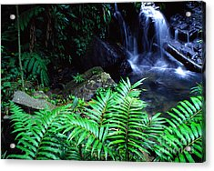 Waterfall El Yunque National Forest Acrylic Print