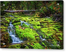 Acrylic Print featuring the photograph Waterfall Over Mossy Rocks by Elena Elisseeva
