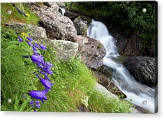 Waterfalls And Bluebells Acrylic Print by Mircea Costina Photography