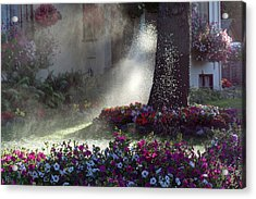 Watering The Lawn Acrylic Print by Keith Boone