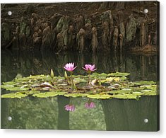 Waterlilies And Cyprus Knees Acrylic Print by Linda Geiger