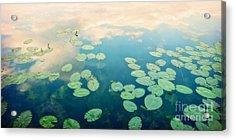 Waterlilies Home Acrylic Print by Priska Wettstein