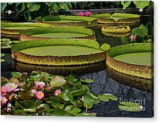 Waterlilies North And South Acrylic Print