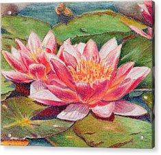 Waterlillies Acrylic Print by Robynne Hardison