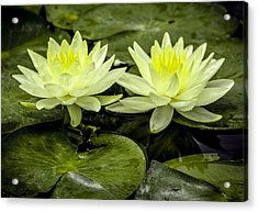 Waterlily Duet Acrylic Print
