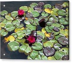 Waterlily Acrylic Print by Gonca Yengin