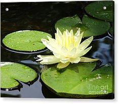 Waterlily In Yellow Acrylic Print by Tonya Laker