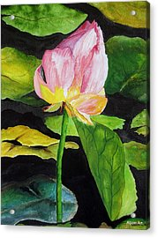 Waterlily Watercolor Acrylic Print by Brenda Alcorn