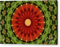 Watermelon Delight Acrylic Print by Sheila Ping