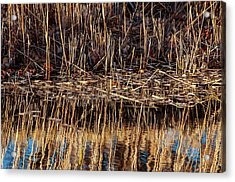 Water's Edge Reflection Acrylic Print