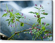 Waterscapes - Lilac Blossom Acrylic Print by Andy-Kim Moeller