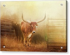 Watusi In The Dust And Golden Light Acrylic Print