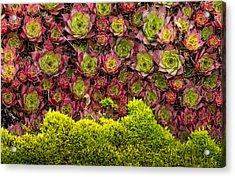 Wave Of Change Acrylic Print