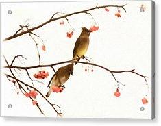 Waxwing Wonders Acrylic Print