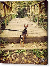 We All Have Our Paths Acrylic Print