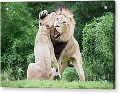 We Are Only Playing Oil Acrylic Print