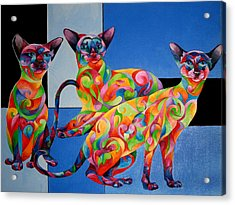 We Are Siamese If You Please Acrylic Print by Sherry Shipley