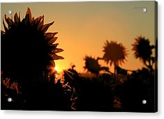 Acrylic Print featuring the photograph We Are Sunflowers by Chris Berry