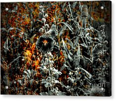 We Fade To Grey Changes Acrylic Print