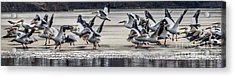 We Have Lift Off  Acrylic Print by Lisa Plymell