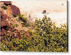 Acrylic Print featuring the photograph We Have Takeoff by Onyonet  Photo Studios