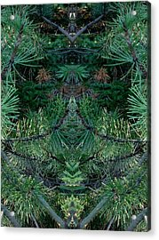 We Live In The Pines Acrylic Print by Marilynne Bull