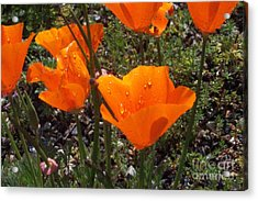 We Love Rain Acrylic Print by Johanne Peale