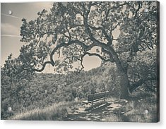 Weary Acrylic Print by Laurie Search