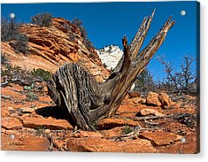 Weathered Check Acrylic Print by Christopher Holmes