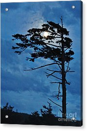 Weathered Moon Tree Acrylic Print