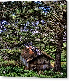 Weathered Shed Acrylic Print by David Patterson