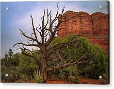 Weathered Tree At Courthouse Butte Acrylic Print