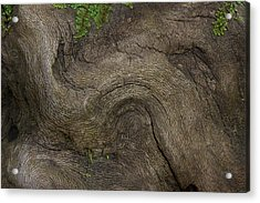 Acrylic Print featuring the photograph Weathered Tree Root by Mike Eingle