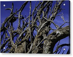 Weathered Tree Roots Acrylic Print by Garry Gay