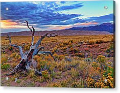 Weathered Wood And Dunes - Great Sand Dunes - Colorado Acrylic Print by Jason Politte