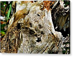 Weathered Wood Acrylic Print by Debbie Portwood