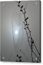Acrylic Print featuring the photograph Web Glow by Peg Urban