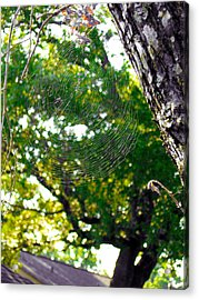 Web Acrylic Print by Kate Collins