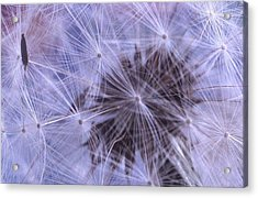Web Of Lies Acrylic Print by Jacqueline Lewis