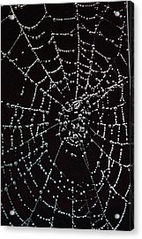 Web Of Pearls Acrylic Print by Rebecca Fitzgerald