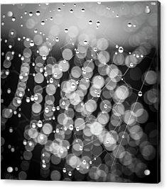 Web Of Water Acrylic Print