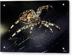 Webmaster Acrylic Print