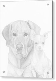 Webster And Lulu Acrylic Print