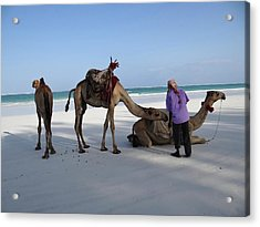 Wedding Camels In The Waiting ... Acrylic Print