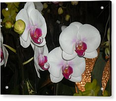 Acrylic Print featuring the photograph Wedding Orchids by Kim Prowse