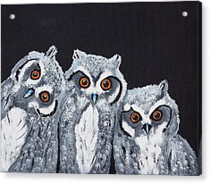 Wee Owls Acrylic Print by Scott Wilmot