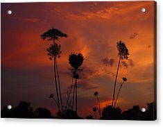 Weeds In The Sunrise Acrylic Print